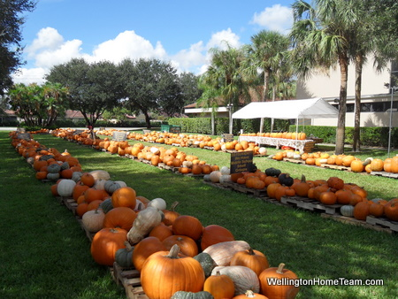 Pumpkin Patch in Wellington FL