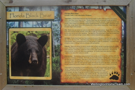 Busch Wildlife Sanctuary Bear Information