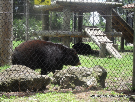 Busch Wildlife Sanctuary Bears