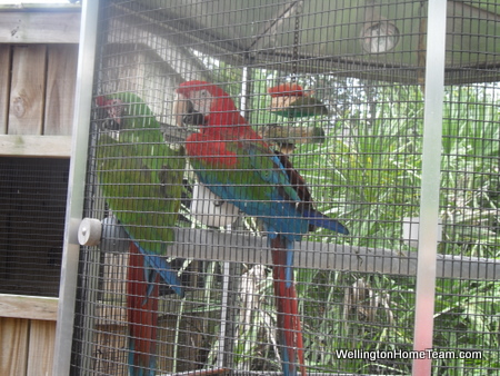Busch Wildlife Sanctuary Parrots