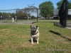 Wellington Florida Parks | Wellington Dog Park