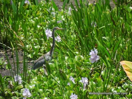 Wellington Peaceful Waters Sanctuary - Bird
