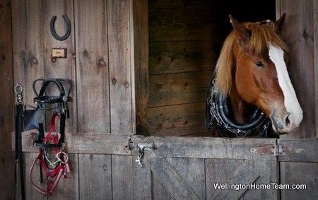 Wellington Florida Equestrian Capital of the World