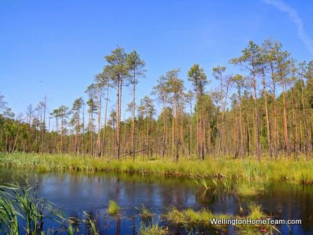 Wellington Florida History | Wellington Florida Swampland