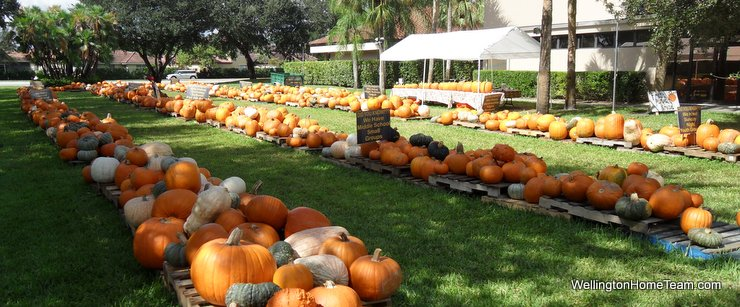 Wellington Florida Pumpkin Patches 2015 Where to Buy a Pumpkin