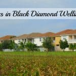 New Listings in Black Diamond Wellington Florida