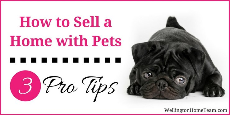 How to Sell a Home in Wellington Florida with Pets - 3 Pro Tips