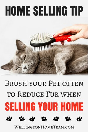 How to Sell a Home with Pets - Remove Pet Fur when Selling your Home