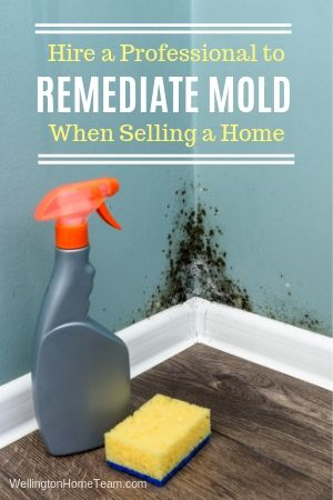 7 Off the Wall Mistakes Home Sellers Make - Covering Up Mold