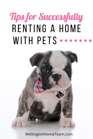 Pet-Friendly Rentals in Wellington - Tips for Successfully Renting a Home with Pets