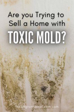 Top 9 Deal Breakers for Homebuyers Toxic Mold